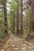 Tree Forest and Stone Trail in Kumano Pilgrimage Route. Kansai, Japan, Asia. Unesco Site — Stock Photo
