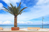 Palm tree, bench and lamp on the sea in Argentario, Tuscany, Italy. — Stock Photo