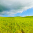 Rural panoramic background, rolling hill and green fields landscape, Tuscany, Italy. — Stock Photo #24328241