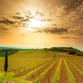 Chianti region, vineyard, trees and farm on sunset. Tuscany, Ita — Stock Photo