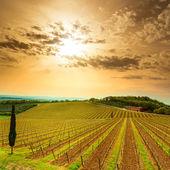 Chianti region, vineyard, trees and farm on sunset. Tuscany, Ita — Stock Photo