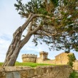 Pine tree in Populonia medieval village landmark, city walls and tower on background. Tuscany, Italy. — Stock Photo