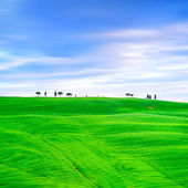 Tuscany, cypress trees and green fields. San Quirico Orcia, Italy. — Stock Photo