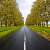 Straight empty wet road between trees. Loire valley. France. — Stock Photo