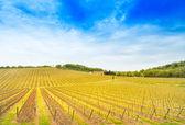 Chianti bölge, üzüm bağı, ağaçlar ve günbatımı çiftlikte. Toskana, İtalya — Stok fotoğraf