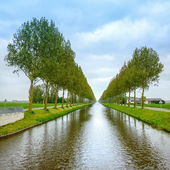 Tree rows on the canal sides and reflection on water near Amsterdam. Netherlands — Stock Photo