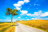 Tuscany, lonely tree and straight road. Siena, Val d Orcia, Italy. — Stock Photo