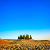 Cypress group and field rural landscape in Orcia, San Quirico, Tuscany. Italy — Stock Photo
