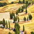Cypress tree scenic road in Monticchiello near Siena, Tuscany, Italy. — Stock Photo