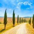 Tuscany, Cypress Trees white road rural landscape, Italy, Europe — Stock Photo #32513287
