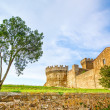 Tree in Populonia medieval village landmark, city walls and tower on background. Tuscany, Italy. — Stock Photo