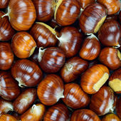 Chestnut raw autumn food, pattern background texture. — Stock Photo