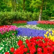 Red tulip garden in spring background or pattern — 图库照片