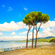 Stock Photo: Pine tree group on the beach and sea bay background. Punta Ala, Tuscany, Italy