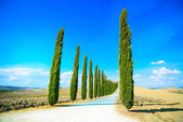 Tuscany, Cypress Trees white road rural landscape, Italy, Europe — Stock Photo