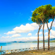 Pine tree group on the beach and sea bay background. Punta Ala, Tuscany, Italy — Stock Photo #35753979