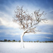 Lonely tree covered by snow in winter. Tuscany, Italy — Stock Photo