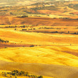 Pienza, rural sunset landscape. Countryside farm and green field — Stock Photo #37010705