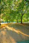 Sunlight and trees in Hyde Park autumn sunset. London, Uk — Foto Stock