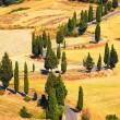 Cypress tree scenic road in Monticchiello near Siena, Tuscany, I — Stock Photo