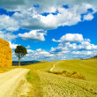 Tuscany, lonely tree and rural road. Siena, Orcia Valley, Italy. — Stock Photo
