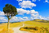 Toscana, árvore solitária e estradas rurais. Siena, vale de orcia, Itália. — Fotografia Stock