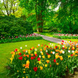 Garden in Keukenhof, tulip flowers and trees. Netherlands — Stock Photo