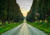 Bolgheri famous cypresses tree straight boulevard on sunset. Mar — Stock Photo
