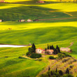 Pienza, rural sunset landscape. Countryside farm and green field — Stock Photo