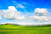 Tuscany, farmland, cypress trees row and field. Siena, Val d Orc — Stock Photo