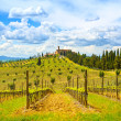 Tuscany, vineyard, cypress trees and village. Rural landscape, I — Stock Photo