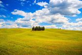Cypress group and field rural landscape in Orcia, San Quirico, T — Stock Photo