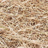 Abstract background of dry grass — Stock Photo