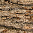 Bark of an old oak — Stock Photo