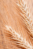 Ears of wheat on a wood background — Stock Photo