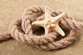 Estrella de mar — Foto de Stock