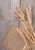 Ripe ears of wheat — Stock Photo