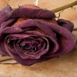 An old scroll and dried rose on grunge background — Stock Photo #9411157
