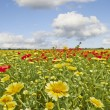 Stock Photo: Flowers in wild summer field