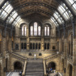 The Natural History Museum of London — Stock Photo
