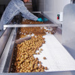 Olives in a processing machine — Stock Photo #38615811