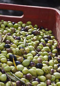 Olives in the box — Stock Photo