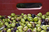 Olives in the box. — Stock Photo