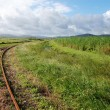 Stock Photo: Queensland sugar cane railways