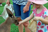 Girl feeds kangaroo — Stock Photo