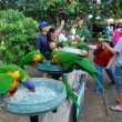 Feeding parrots in Australia — Stock Photo