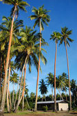Palms and house in Papua New Guinea village — Stock Photo
