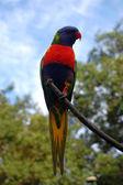 Papegaai op boom — Stockfoto