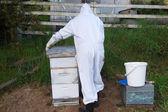 Man arbetar med bikupa — Stockfoto