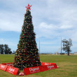 Oceania christmas tree — Stock Photo